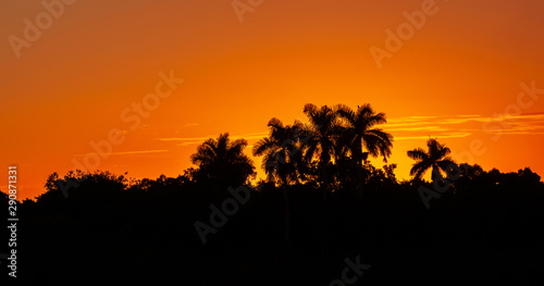 Foto auf Leinwand Rotglühen Silhouettes of Palm trees and bushes on a background of orange red sunset sky.Everglades National Park.Florida.USA