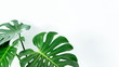 Leinwanddruck Bild - Philodendron Monstera deliciosa , Tropical Botany Big Fresh Green Leaf . Hipster and Minimal Style , with copy space .