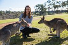 Hand Feeding Kangaroos In Australia