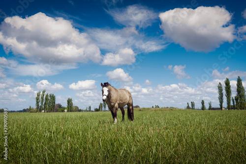 Cuadros en Lienzo  Un caballo pastando en una granja de Carlos Keen, Provincia de Buenos Aires, Arg