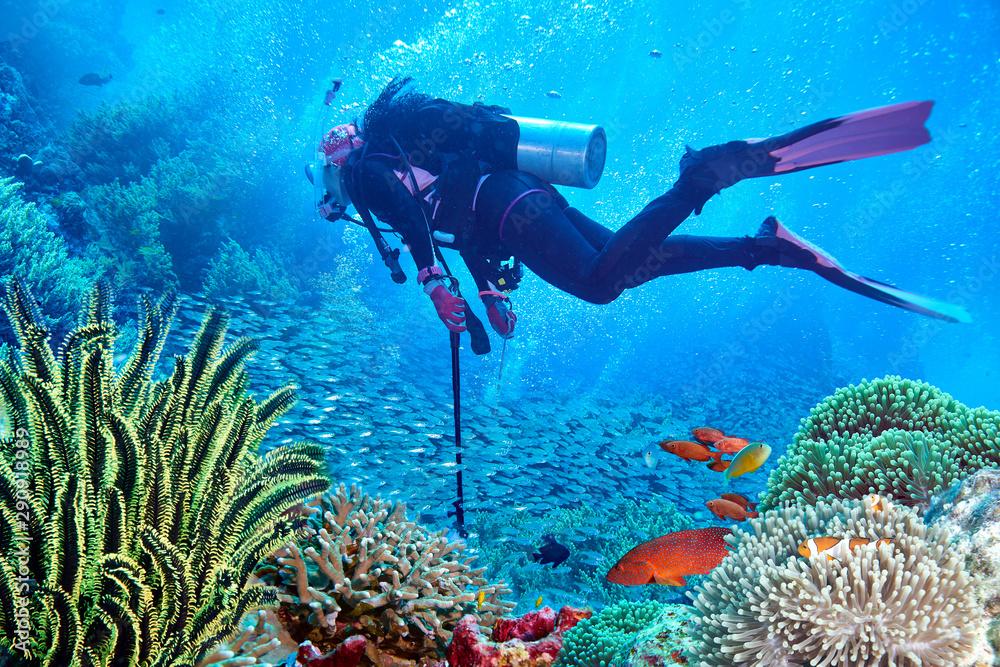 Fototapeta scuba diving