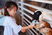 A Cute Asian Girl Feeding A Bo...