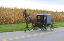 An Amish Carriage Driver In Pe...