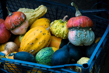 Colorful Pumpkins In Box In Market At Autumn