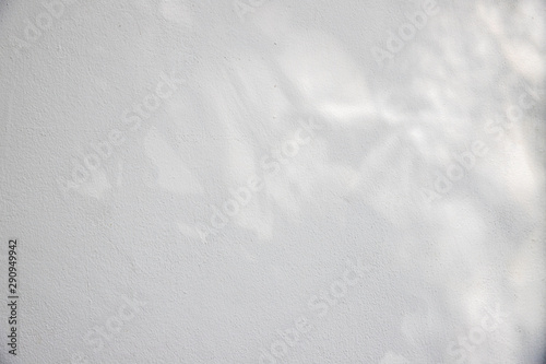 Obraz shadow of leaf tree on white cement wall - black and white gray background - fototapety do salonu