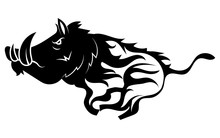 Running Wild Boar. Black And W...