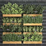 Decorative plants for the kitchen, a vertical garden of greenery
