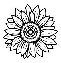 Sunflower Flower. Black And Wh...