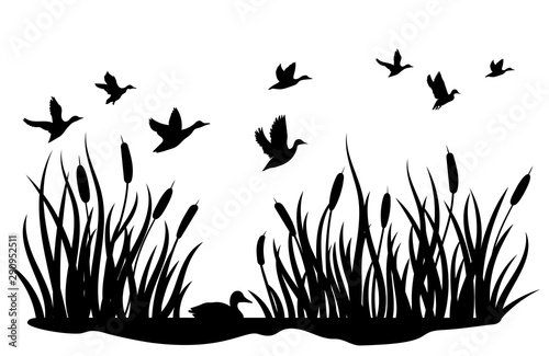 a flock of wild ducks flying over a pond with reeds black and white illustration of ducks flying over the river vector drawing of a wild bird for the hunter buy river vector drawing of a wild bird