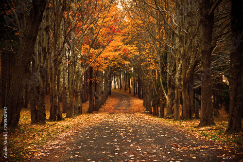 Fototapety, obrazy: autumn in the park