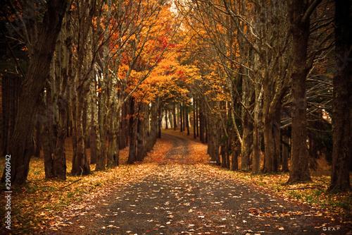 Obraz autumn in the park - fototapety do salonu