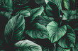 Leinwandbild Motiv leaves of Spathiphyllum cannifolium, abstract green texture, nature background, tropical leaf