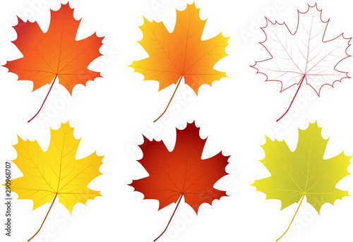 Set of colorful autumn maple leaves Fotobehang