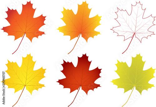 Obraz na plátně  Set of colorful autumn maple leaves
