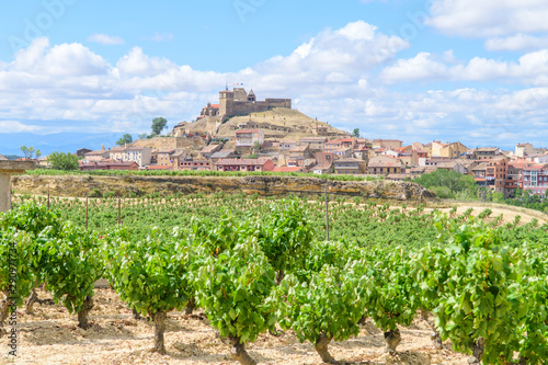 grapevine fields of la rioja, Spain