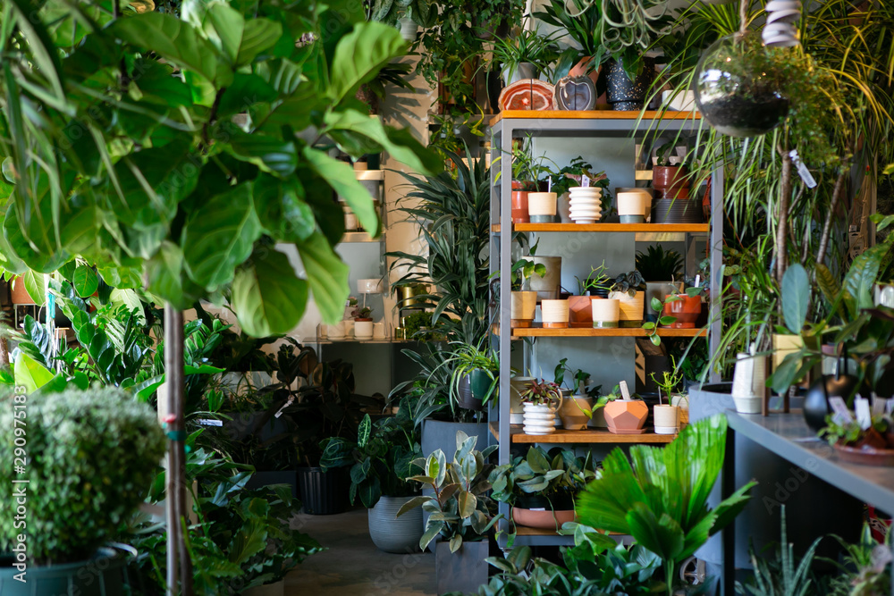 Fototapety, obrazy: Modern plant store with planter pots on shelf for sale
