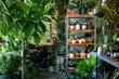 Modern plant store with planter pots on shelf for sale