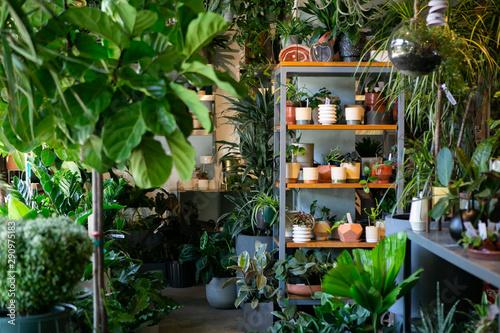 Fototapeta Modern plant store with planter pots on shelf for sale obraz