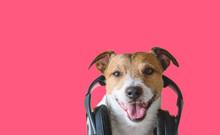 Cool Dog With Headphones Liste...