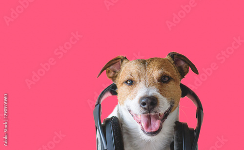 Cool dog with headphones listening and enjoying music - 290976960