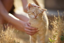Female Hand Stroking A Cat On ...