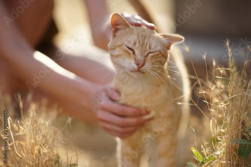 Pinturas sobre lienzo  female hand stroking a cat on the head in a summer sunny garden