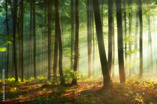 Acrylic Prints Landscapes Beautiful morning in the forest