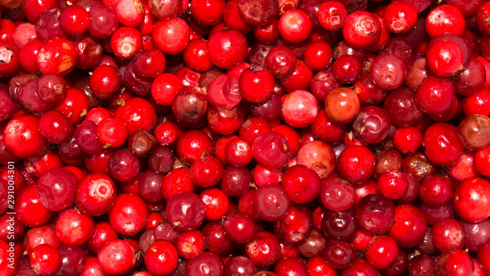 Fototapety, obrazy: Berries cranberries.Cranberry background.Wild berry cranberries.
