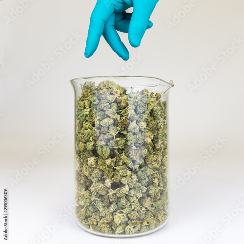 Obraz na plátně Hand Reaching for Cannabis