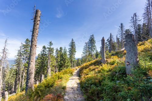 Photo sur Aluminium Route dans la forêt Path through the dead forest in Polish Beskid Mountains, hiking trail, summer lansdcape