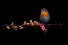 Art In Nature Photography. Spo...