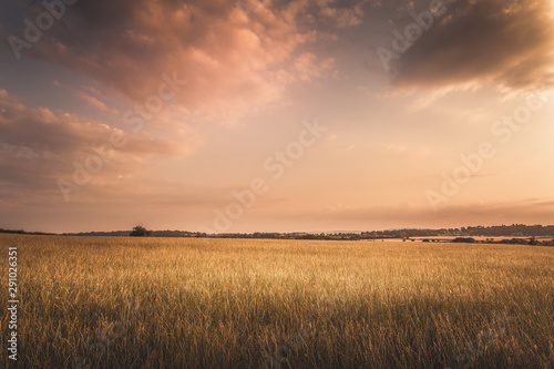 Obraz na plátně golden hour sunset with hay field under clouds in gloucestershire