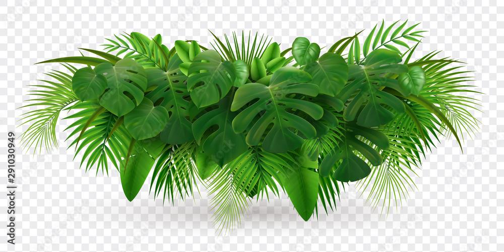 Fototapeta Tropical Leaves Bush Composition