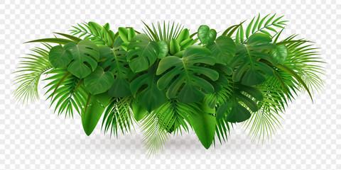Sastav grma tropskog lišća