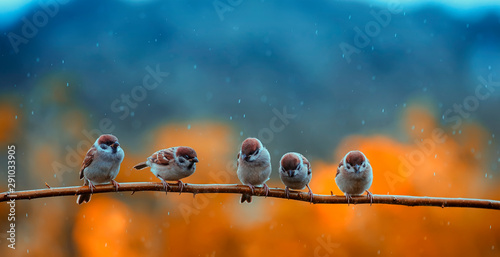 Fotografía funny many little birds sparrows sitting on a branch in a bright autumn Park und