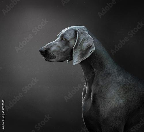portrait of a dog Fototapet