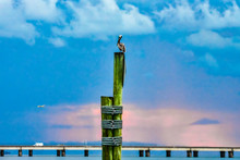 Pelican On Post At Sunset