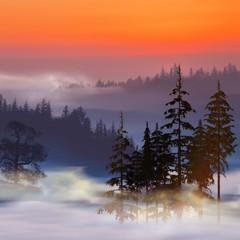 Obraz na Szkle3D illustration. Colorful artistic wildlife landscape.