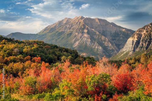Fotografie, Obraz  Timpanogos with vivid fall color, Utah, USA.