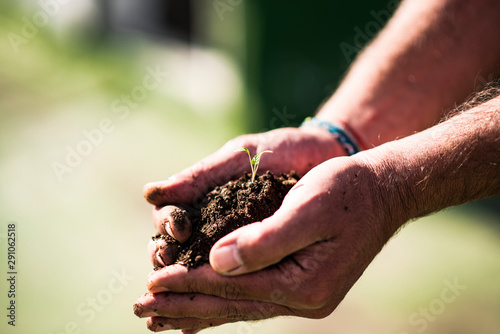 Fototapeta  plant sprouting in hands