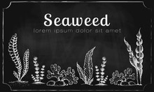 Vector Horizontal Banner Template With Drawn Seaweeds On Chalkboard. Vintage Background With Engraved Seaweeds Corals And Reef On Blackboard. Underwater Hand Drawn Elements. Vintage Seaweed Collection