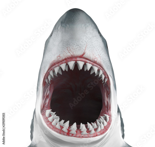 Great White Shark Open Mouth Isolated Tableau sur Toile