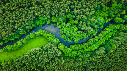 Panel Szklany Eko River and green forest in Tuchola natural park, aerial view