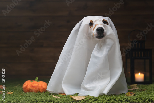 Cuadros en Lienzo Dog Pet Jack Russell Terrier Dressed In Costume