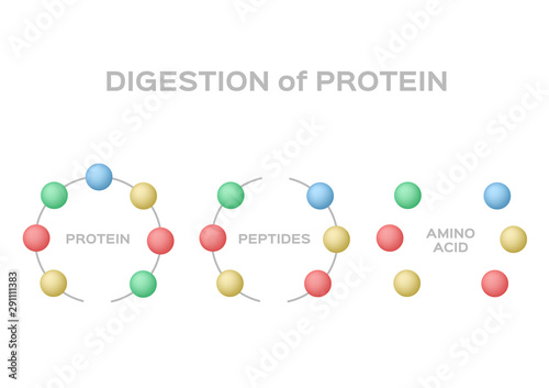 Photo digestion of protein vector / protein peptide amino acid