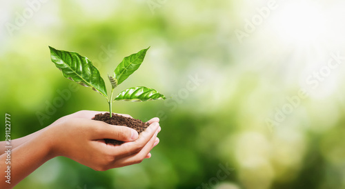 Photo Stands Plant hand holding young plant on blur green nature background. concept eco earth day