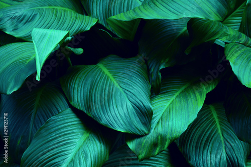 Fototapety, obrazy: Creative tropical green leaves layout. Nature spring concept.