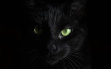 Black Cat, Face, Look. Looks S...