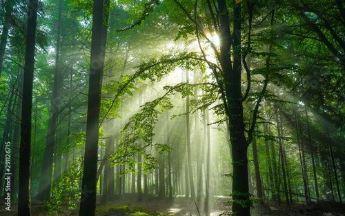 Poster Olive Beautiful forest sunrise in Germany