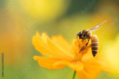 Papel de parede  Closeup nature view of flower and bee on blurred greenery background in garden with copy space using as background natural flower landscape, ecology, fresh wallpaper concept